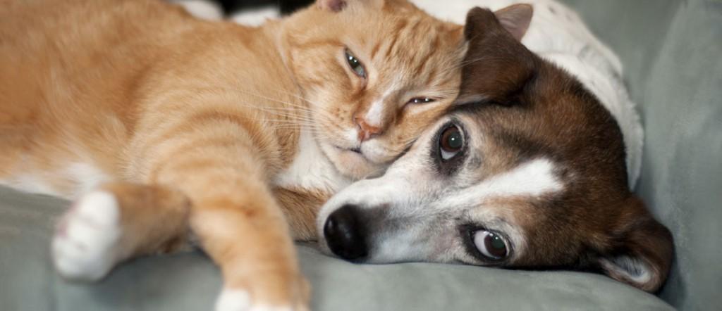 Cat Adoption Orange County Ca